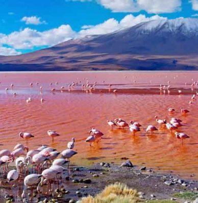 Salar de Uyuni + Laguna Colorada 2 Dias