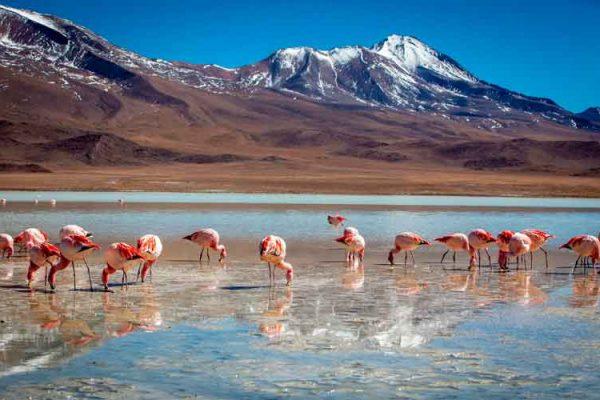 Tour Salar de Uyuni y Lagunas Altiplánicas